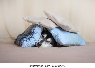 dog covered with pillows lies on the floor