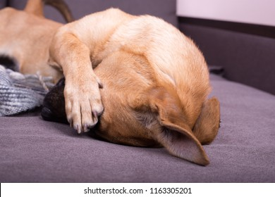 Covering Eyes Images Stock Photos Amp Vectors Shutterstock