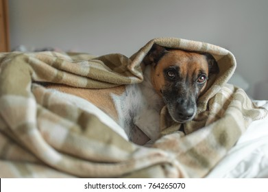 Dog cozy on bed