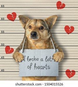 """The dog criminal has the sign around his neck that says """" I broke a lot of hearts """". Lineup background."""