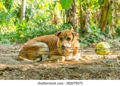 A dog crouching behind barbed wire