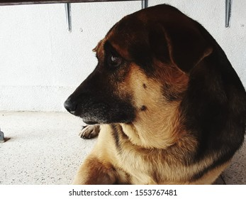 dog cute bigdog animal color white black brown
