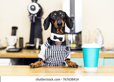 dog dachshund barista, giving coffee cup to her customer in coffee house