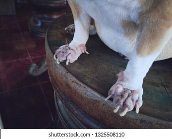 dog decease on feet