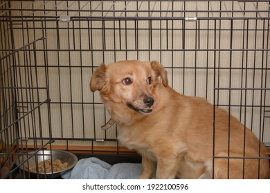 Dog with defect in jaw cage. Dog with crooked teeth is waiting for new owner at animal shelter. Pet care concept.