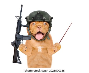 dog defender in helmet and with M16 rifle in paws pointing away with pointig stick. isolated on white background