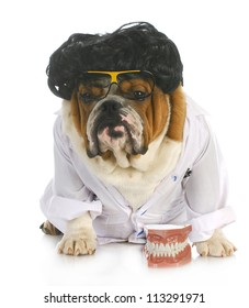 dog dentistry - english bulldog dentist in lab coat with teeth