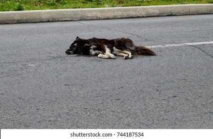 The dog died under the wheels of a car on the road. Dead animal on the road.