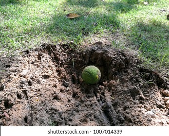 The dog was digged the hole in the garden to hide the tennis ball toy.