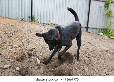 dog digging a hole
