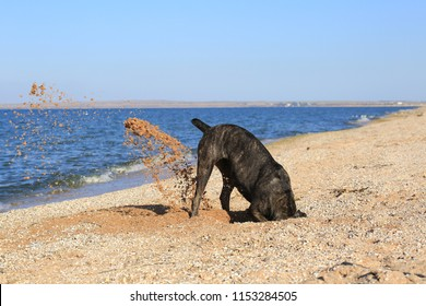A dog digging a hole in the sand on the beach