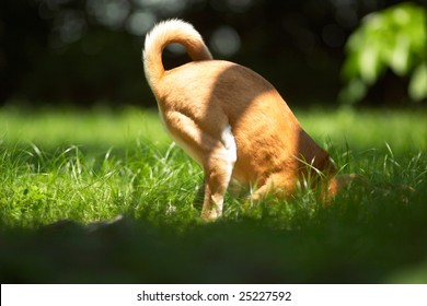 The dog is digging a hole that appears  to find something.