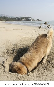 A dog digging on the beach