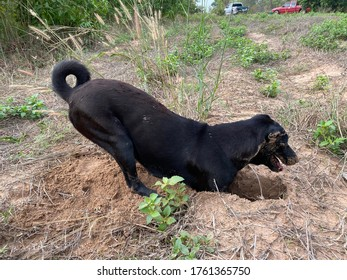 The dog is digging the reptile hole