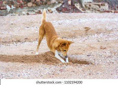 dog digging sand at the beach