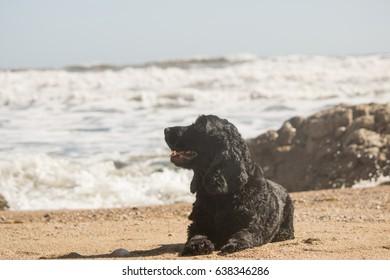 dog distracted