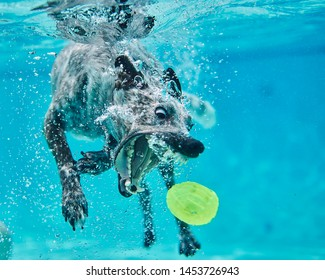 Dog dives for yellow ball in pool