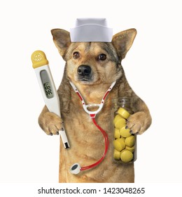 The dog doctor in a medical hat with a stethoscope holds a clinical digital thermometer and a bottle of yellow pills. White background. Isolated.