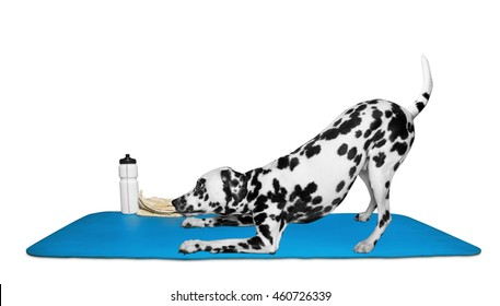 Dog doing yoga or pilates exercise -- isolated on white