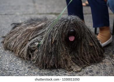 dog with dreadlocks