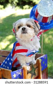 Dog dressed up for the 4th of July