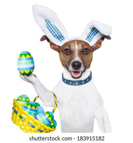 dog dressed up as bunny with easter basket full of eggs