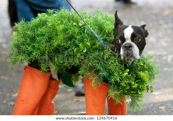 A dog is dressed in a chia pet costume for a Halloween dog costume contest.