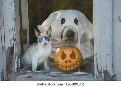 Dog dressed like a ghost and little kitten with a halloween pumpkin