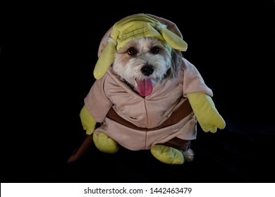 A dog is dressed up as Yoda from the movie Star Wars for Halloween.