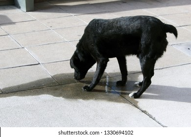 Dog is drinking water in the street