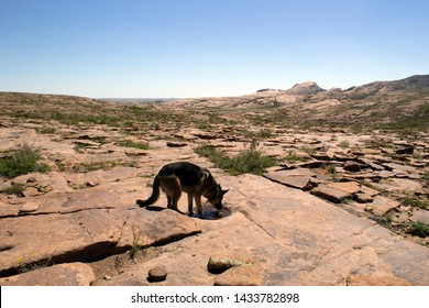 Dog drinks water from a puddle on the rocks