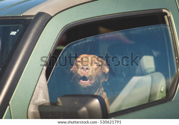Dog in drivers seat of green vehicle with windows open partly
