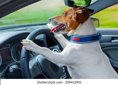 Dog Driving Car Images Stock Photos Vectors Shutterstock
