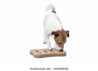 Dog during mentally stimulating activity with puzzle sniffing game