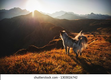 Dog during sundown in the mountains. Hiking with dogs. Adventures in the Dolomites.