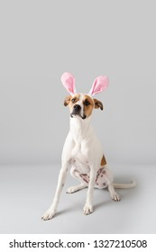 Dog with Easter Bunny Ears