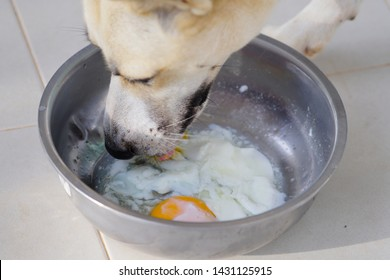 A dog eat soft-boiled eggs in the bowl.
