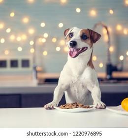 Dog eating food at home. Happy pet