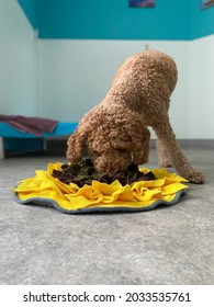 Dog eating from snuffle mat, mental exercise