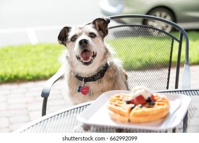 Dog Eating Waffle