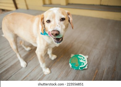 Dog eats birthday cake