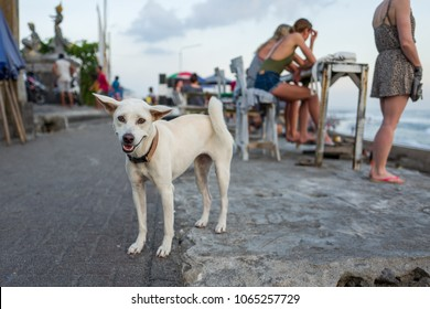 A dog at Echo Beach in Canggu, Bali.