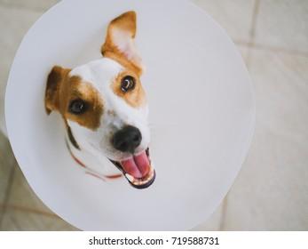 Dog with E-Collar