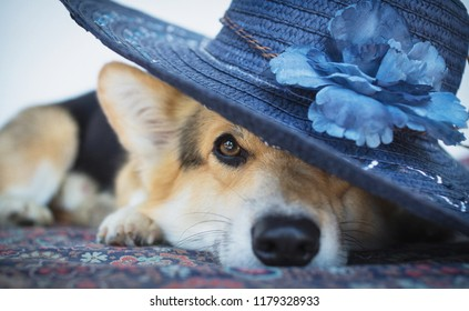 A dog in an elegant blue hat with a flower.
