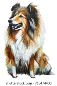Dog english yellow drawing (Collie)