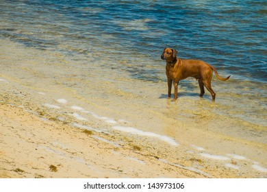 Dog enjoying the beach.