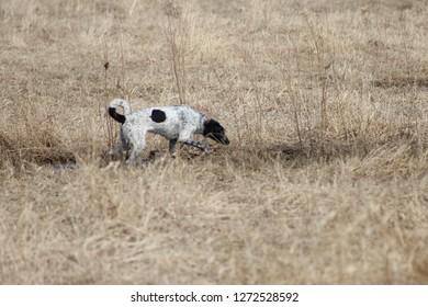 Dog enjoying the dog park