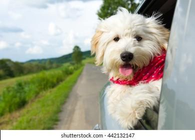 Cão desfrutando de um passeio com o carro