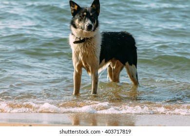 dog enjoying the sun at the beach after swimming