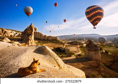 Dog enjoying the sunrise view and hot air balloons in Cappadocia, Turkey